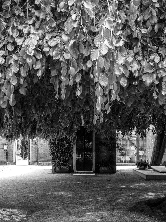 Overgrown foliage covers the tombs at Isola di San Michele in Venice.