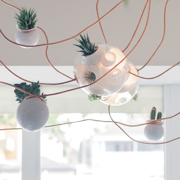 The lights at Vancouver's TacoFino restaurant incorporate cacti and succulents. Photo by Gwanael Lewis