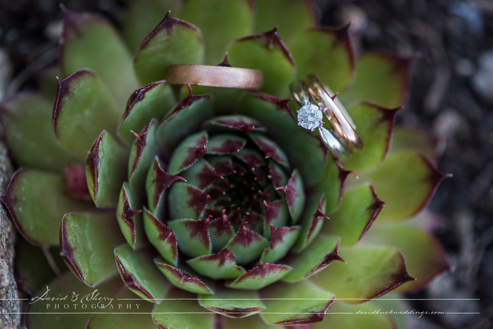 Wiarton_Wedding_Photography_26