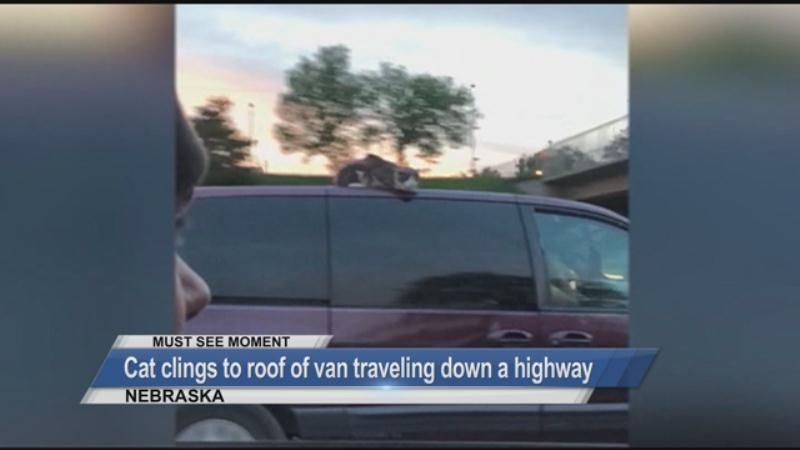 MUST SEE: Cat clings to roof of van traveling down a highway