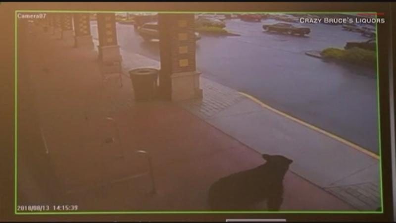 MUST SEE: A bear walks into a liquor store