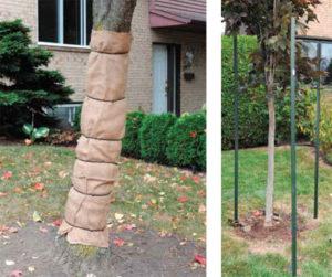 arbre protégé
