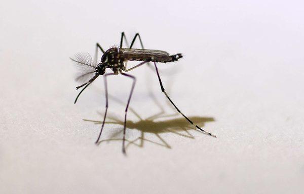 virus-zika-transmis-moustiques