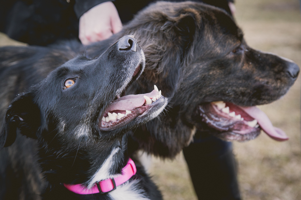 owen-sound-family-portraits-dogs-363