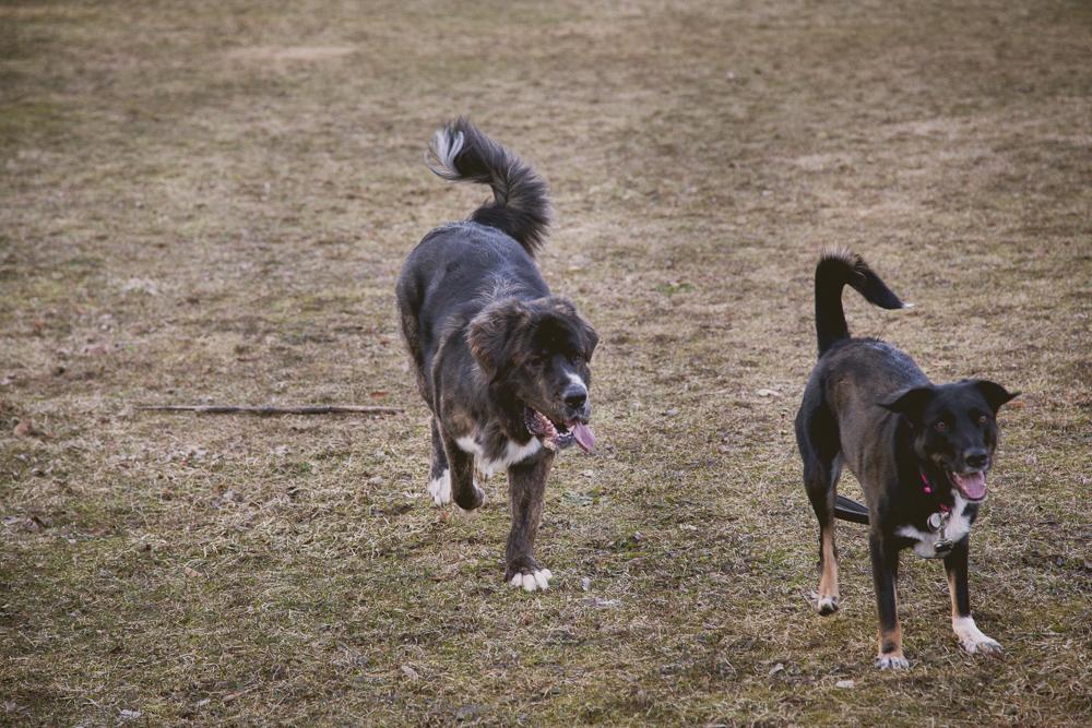 owen-sound-family-portraits-dogs-222