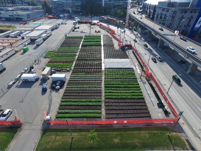 Sole Food Farms at BC Place. Photo courtesy of Michael Abelman