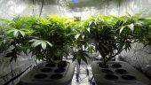 grow op, Ontario realtors