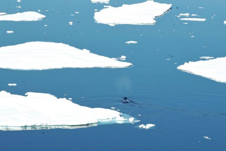 Arctic, global commons