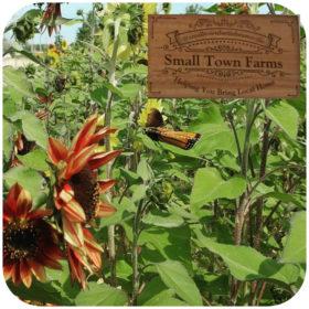 Small Town Farms