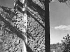 A detail of Trent's famous rubble aggregate concrete