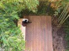 Aerial View of a Contemplative Moment in the Six-Storey Bamboo Garden.