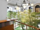 A View From a Typical Lab and Office Floor Overlooking One of a Number of Two-Storey Winter Gardens Planted With Black Olive Trees