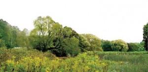 Conscious cultural incursions invading natural landscapes.