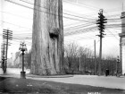 The Goodweather Collective's thought-provoking and deceptive image entitled Roundabout Vancouver: Wires, circa 1914 has been digitally altered to include a fictitious old-growth tree in the middle of an intersection. The Goodweather Collective