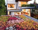 The planted roof and rear faade of this tightly detailed home. Lucas Finlay