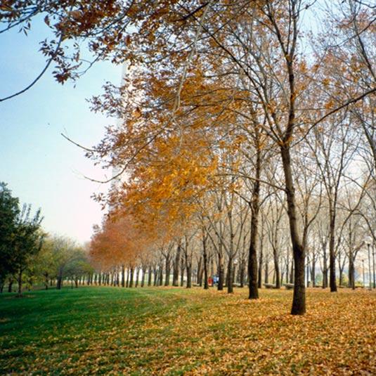 meyer landscape