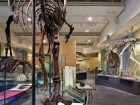 A complete overhaul of the building's interiors has yielded a more interactive approach to viewing natural history. Tom Arban