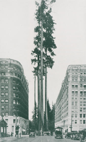 composite picture comparing the mighty douglas fir with a 10-storey office building. from durable douglas fir, america's permanent lumber supply, by bror l. grondal. (seattle: west coast lumber trade extension bureau, 1926), page 16-17. CCA collection. TC ID:89-B2041