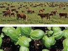 Cattle and seedling images provide a regional and pastoral context to the site.