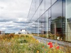 Extensive green roofs mitigate stormwater. Silent Sama
