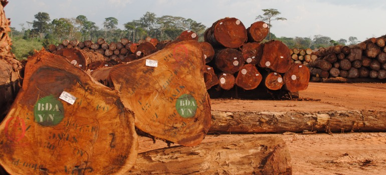 in cameroon students encountered a scheme to deprive indigenous people of their livelihoods in their community forest.