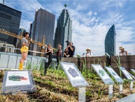 TELUS corporate urban community garden opening