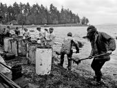 An improvised oil-spill cleanup at Stanley Park, Vancouver in 1973. Photo: John Denniston.