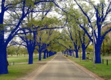 """Says the artist, """"The fact that blue is a colour that is not naturally identified with trees suggests to the viewer that something unusual, something out of the ordinary has happened. It becomes a magical transformation."""""""