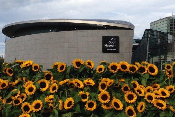 125000 Sunflowers Turn Amsterdams Van Gogh Museum Yellow