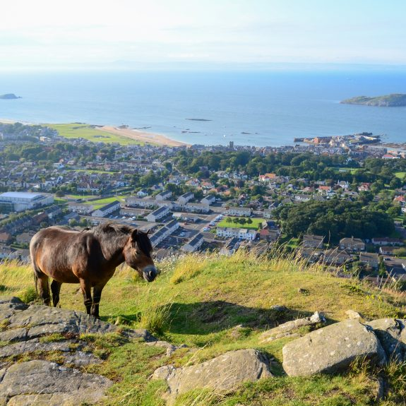 An Exmoor pony standing on top of North Berwick Law, a volcanic hill above the Scottish town of the same name.