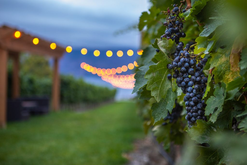 wellness, wine, Okanagan, winery