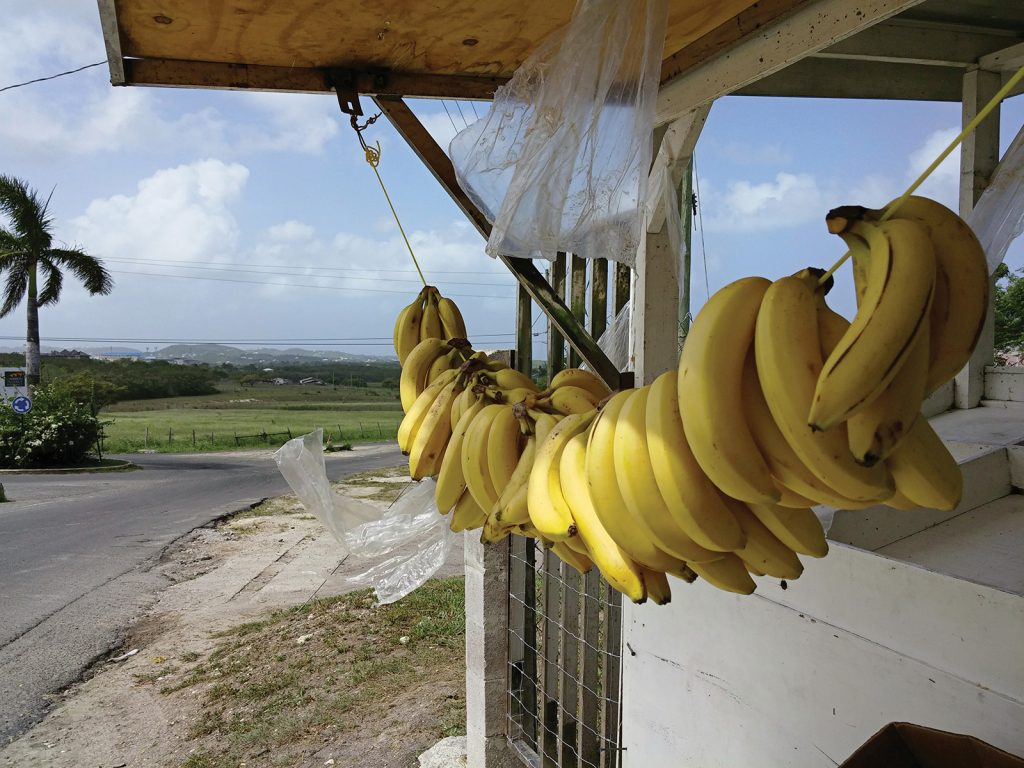 Bananas at a roadside fruit stand
