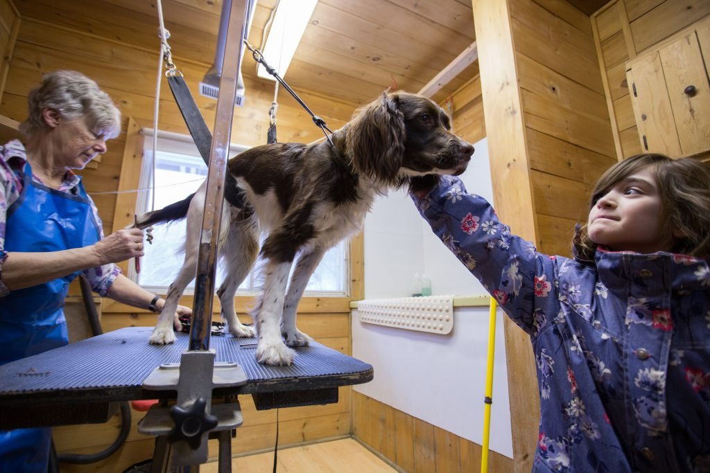 Domaine Summum, Mont-Tremblent, dog hotel, Quebec