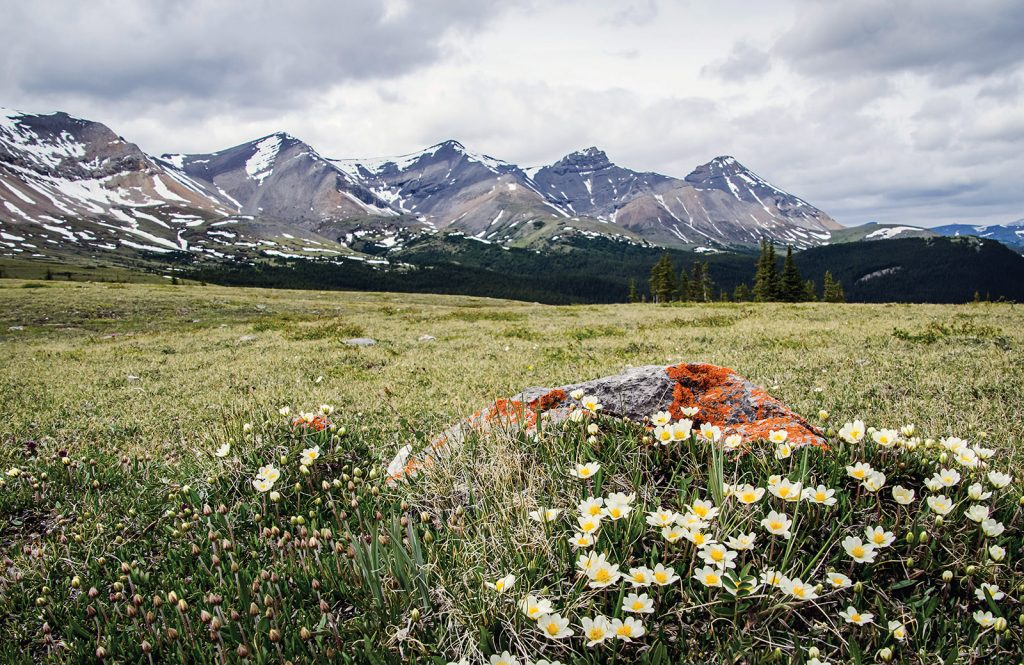 A meadow of wildflowers with mountains in the background