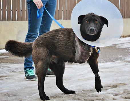 Alberta Animal Rescue Crew Society (AARCS)   Community
