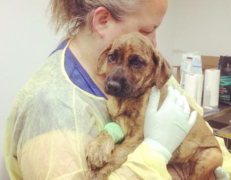 Alberta Animal Rescue Crew Society (AARCS) | Community