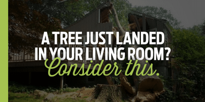 A Tree Just Landed In Your Living Room? Consider This.