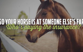 So Your Horse Is At Someone Elses Farm Whos Paying The Insurance
