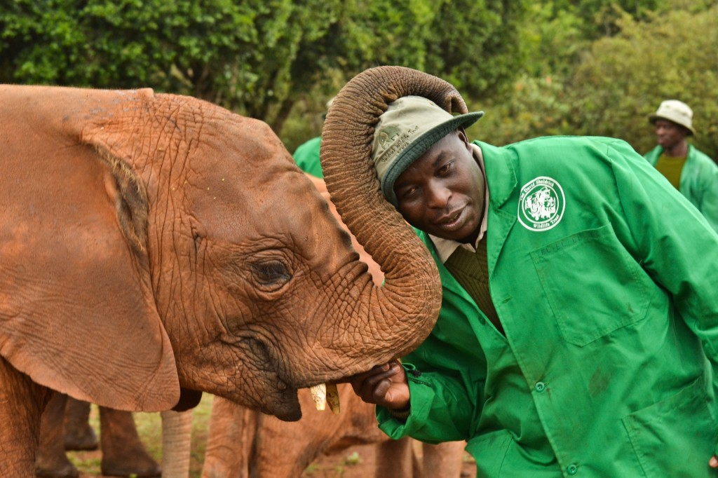 Edwin Lukhuwa stands by a baby elephant as the animal wraps it's trunk around his head playfully