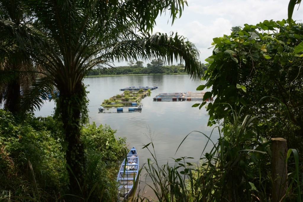 View of lake Volta from trees and a small blue canoe on the water