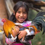 A girl proudly holds a rooster. There's a farm in the background.