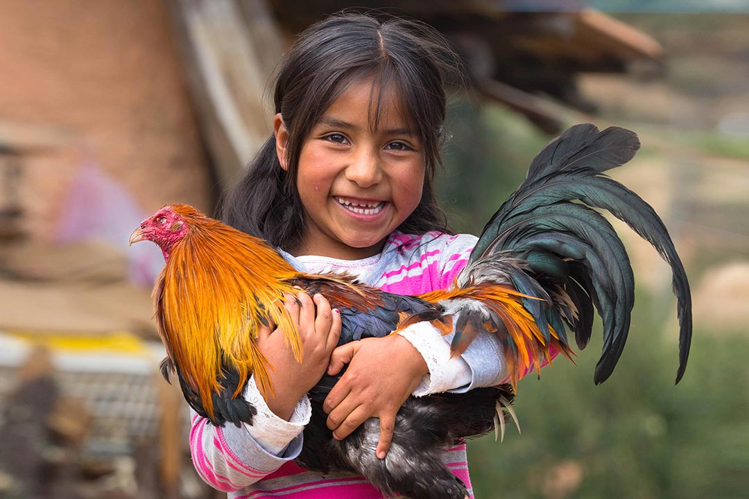 A girl standing in front of a farmhouse proudly holds a rooster