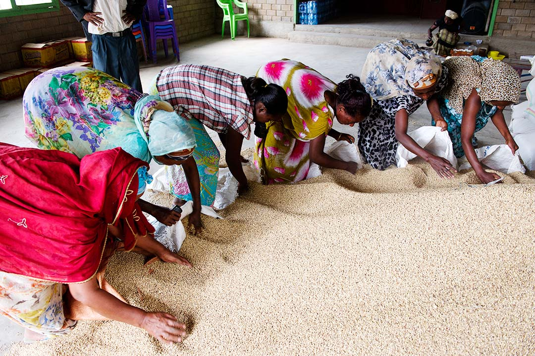 Six Ethiopian women bend to scoop sorghum into bags. They are inside a brick building gathered around a large mound of sorghum that has been poured out on the floor for distribution.