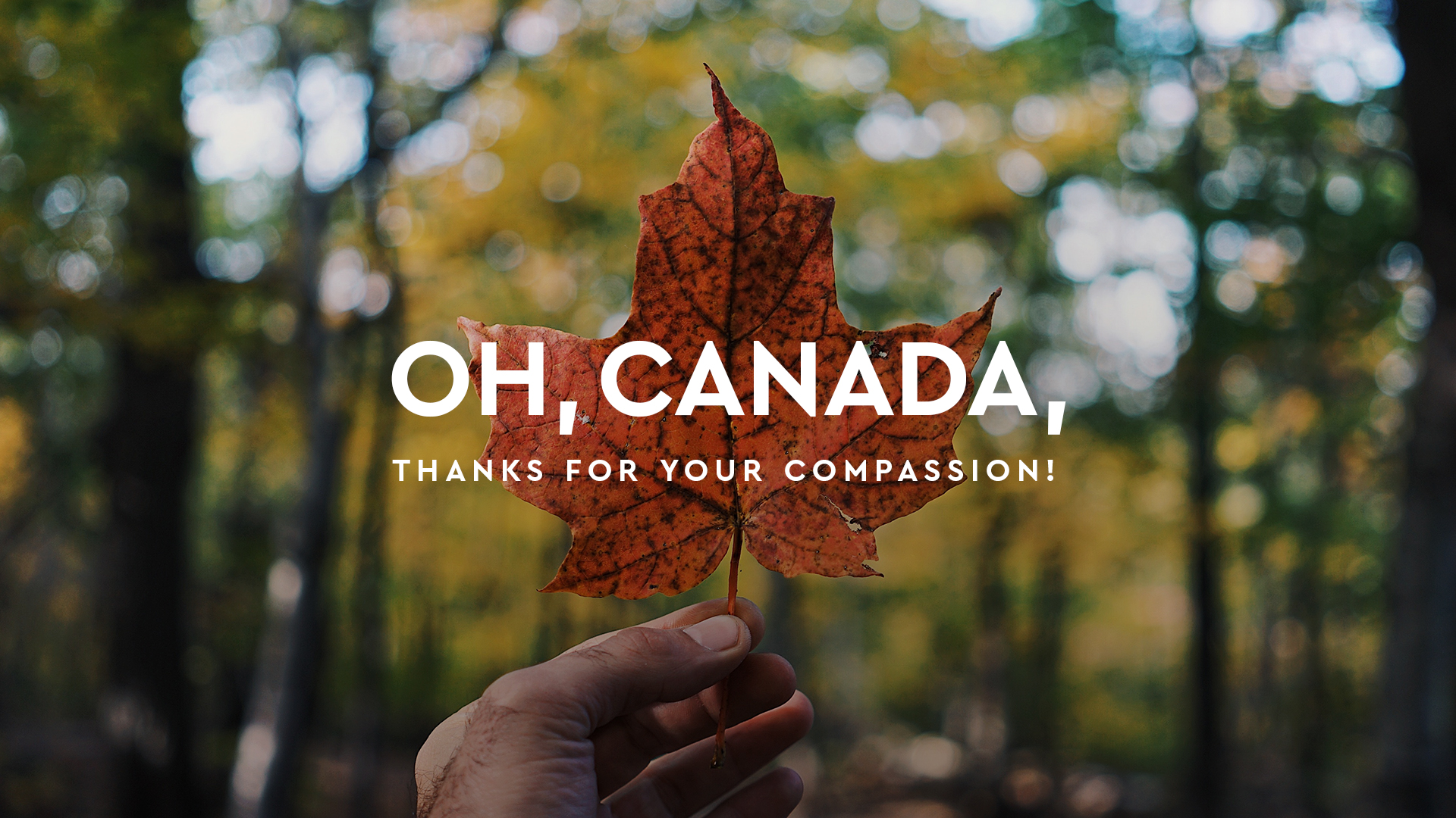 "Photo of someone holding up a maple leaf in a forest with the words, ""Oh Canada, thanks for your compassion!"""