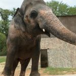 Cher's joy as Pakistan agrees to free lonely elephant Kaavan [ARTICLE]