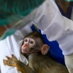 Thailand enters global race for vaccine with trials on monkeys [ARTICLE]