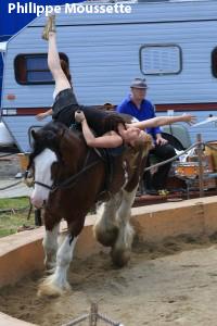 Le spectacle des chevaux