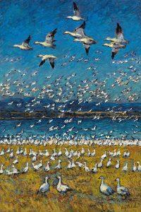 Neige Les Oies - Raynald Leclerc - Oies blanches dans le ciel