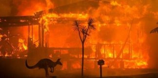 Australie : 1,25 milliard d'animaux morts à cause des incendies de forêts