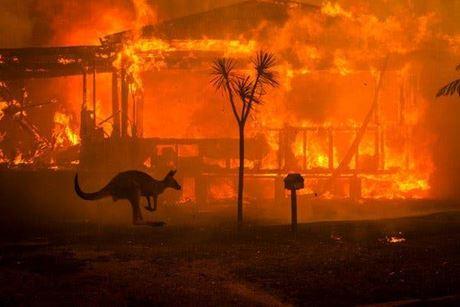 Australie : 1,25 milliard d'animaux morts à cause des incendies de forêts